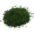 Chervil Leaf Cut & Sifted -