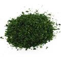 Chervil Leaf Cut & Sifted -