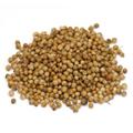 Coriander Seed -