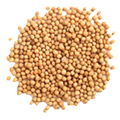 Mustard Seed Yellow Whole #1 Grade