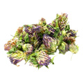 Organic Red Clover Blossoms Whole -