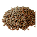 Organic Red Lentil Sprouting Seed -