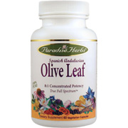 Spanish Andalusia Olive Leaf -