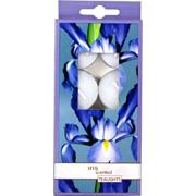 Iris Candle -